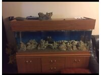 Marine/Tropical tank for sale rocks included