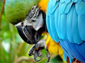 RECHERCHE livre sur les perroquets.