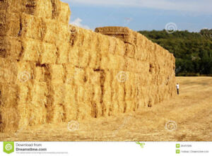 Hay: Square bales, old or moldy