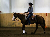 Bombproof Mare***PERFECT KID/ 4H HORSE