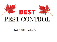 BEST Pest Control in all of GTA! + 50% OFF! Call 647 961 7426