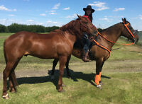 General Ranch Hand Available