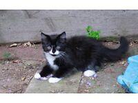 Beautifull fluffy kittens for sale