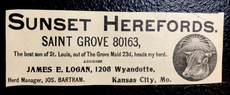 1900 Sunset Herefords Farm Cattle Advertising - Kansas City - Missouri - Cow