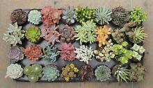 Succulents Plants Cactus Plants Granton Derwent Valley Preview
