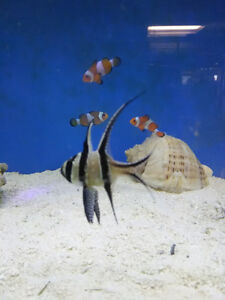 Reefs N Reptiles- STORE EXPANSION