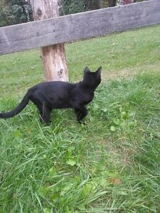 2 Beautiful Black Cats Looking For Home!