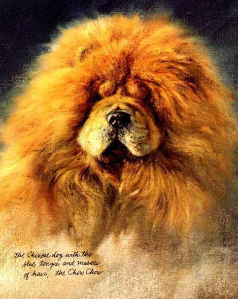 Chow Chow - Vintage Dog Art Print - Poortvliet