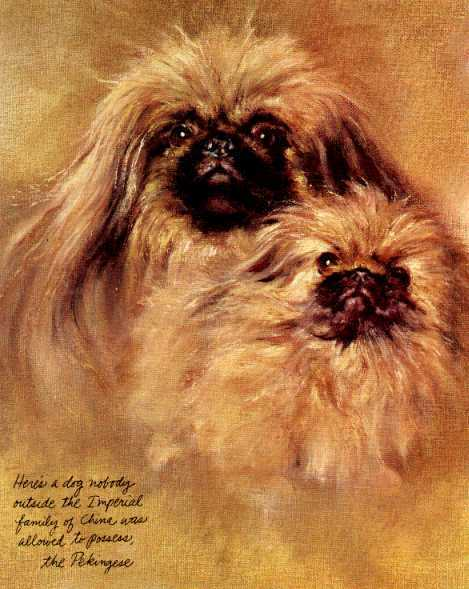 Pekingese - Vintage Dog Art Print - Poortvliet