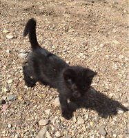 Free kittens to give away in Melfort