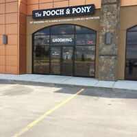 Pet Groomer required for very busy salon in Stony Plain