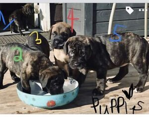 Adopt Dogs & Puppies Locally in Grande Prairie | Pets