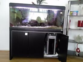 Four Foot Fish Tank everything included