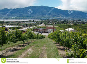 """""""C1"""" commercial zoned orchard in Osoyoos w/ amazing views"""