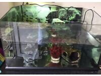 Turtle tank plus water heater and filter