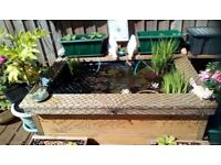 Fish (gold fish), Pond,raised. Plants, filter, plus extras. As seen. Buyer collects.