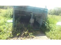 Chicken area,land to rent in Kingscliffe.