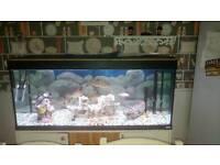 Four foot fish tank