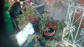 Plant pots and soil