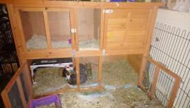XL guinea pig or rabbit hutch.