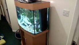 3ft bow front jewl fish tank