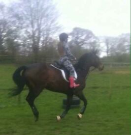 Thoroughbred mare for part loan