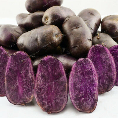 Purple Potato Seeds Purple Sweet Potato Delicious Nutrition Green Vegetable Seed