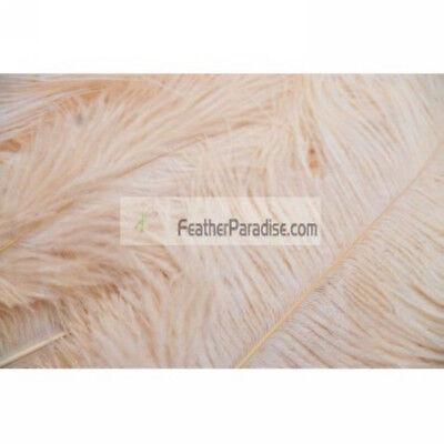 Beige Ostrich - Beige Ostrich Feathers 10-12 inch 12 Pieces (USA Seller)
