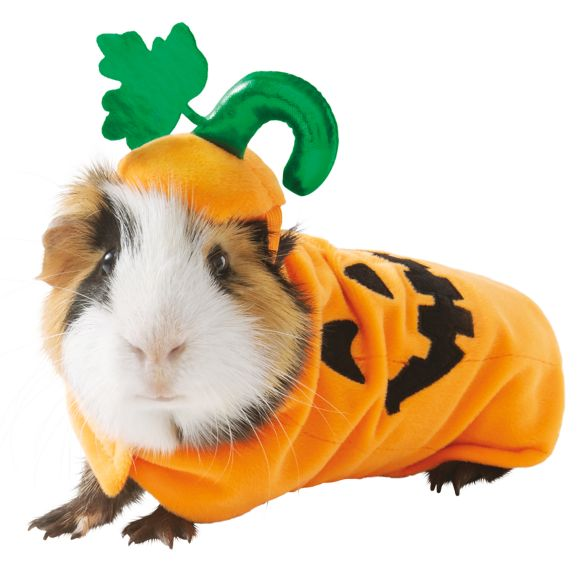 Guinea Pig Small Pet Pumpkin Holiday Halloween Costume Cloth