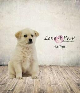 "Baby Male Dog - Mixed Breed: ""Miloh"""