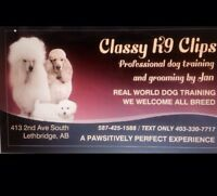Classy k9's dog grooming and training