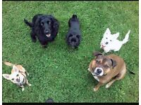 Dog Walking Services In Huyton/Liverpool