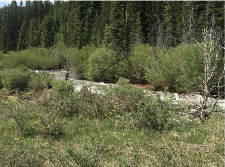 20 ACRE PARK COUNTY COLORADO GOLD MINING CLAIM PLACER SHEEP CREEK  - $1,035.00
