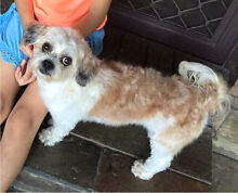 I lost my dog Edensor Park Fairfield Area Preview