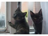 Adorable and playful 10 week old kittens need a loving new home