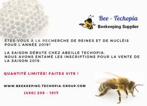 Bees on sale
