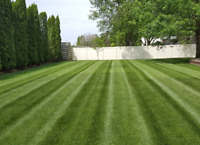 Professional lawn mowing and grass cutting service NO CONTRACTS