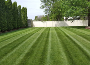 Affordable lawn mowing grass cutting