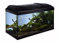 Fish Tank Aquarium 80x35x40cm 3ft Brand New Straight + Refurbishment Black Hood