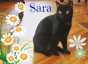 Visit Sara at Global Pet Foods - Dieppe