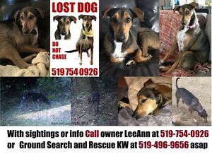 LOST DOG:  BRANT COUNTY