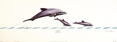 "WARWICK HIGGS ""Splash"" DOLPHIN calf jumping NEW art SIZE:28cm x 76cm  RARE"