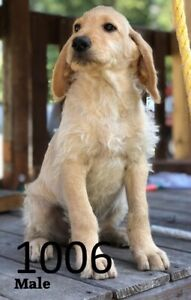 Puppies | Kijiji in Calgary  - Buy, Sell & Save with