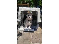 Airline Approved Dog Travel Kennels