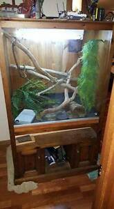 Bearded Dragon and Vivarium - Complete Setup - MUST GO Lyndoch Barossa Area Preview