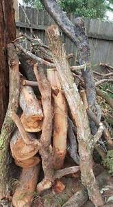 FREE firewood for coming winter Padstow Bankstown Area Preview