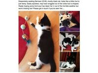 MISSING SMALL BLACK & WHITE CAT