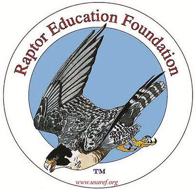 Raptor Education Foundation