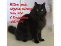MISSING FROM S26 TODWICK - BLACK CAT - SEMI LONG HAIR MALE - MICROCHIPPED - NEUTERED - 9YR OLD