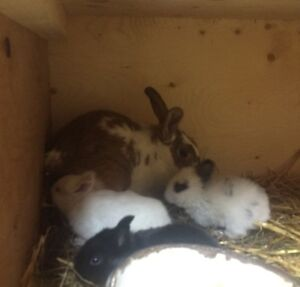 Rabbit with 4 little ones